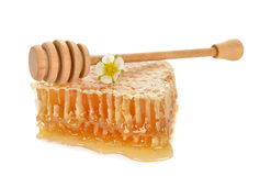 Honey Comb Royalty-vrije Stock Foto