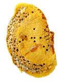 Honey Comb Arkivfoto
