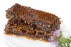 Honey Comb Stockfotografie
