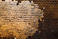 Honey Comb Royalty-vrije Stock Afbeeldingen
