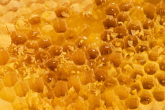 Honey in the comb. Fresh honey in the comb. Natural background royalty free stock images