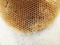 Honey comb bee home Stock Image