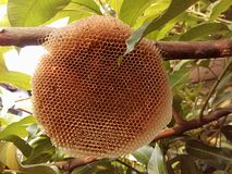 Honey comb bee home Stock Images