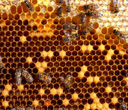 Honey comb and a bees Royalty Free Stock Photography