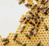 Honey comb and a bees Royalty Free Stock Images