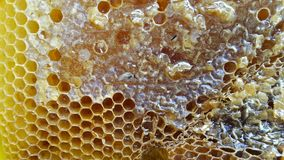 Honey comb close-up Royalty Free Stock Images