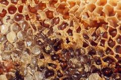 Honey Comb com mel Teste padrão abstrato do favo de mel para o projeto fotografia de stock