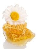 Honey comb and daisy  on white Stock Photos