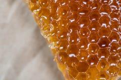 Honey Comb Edge Close Up royaltyfria bilder