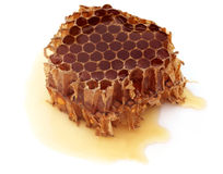Honey Comb with honey Stock Image