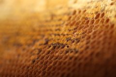 Honey comb. Honeycomb background close up shoot Stock Photo