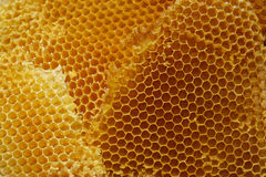 Honey comb Royalty Free Stock Photos