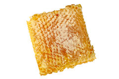 Honey comb Stock Images