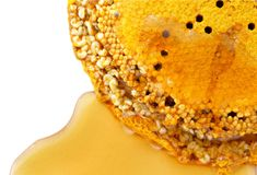 Honey comb Royalty Free Stock Photography