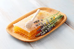 Honey comb Stock Images