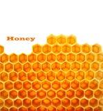 Honey in comb Stock Photos