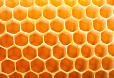 Honey in comb. Honey macro in comb texture pattern background Stock Photos