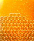 Honey in comb Stock Photo