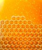 Honey in comb Stock Photo