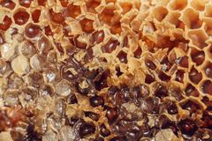 Honey Comb met honing Abstract Honingraatpatroon voor ontwerp Stock Fotografie