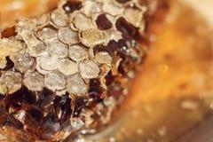 Honey Comb mit Honig Abstraktes Bienenwabenmuster für Design Lizenzfreie Stockfotos