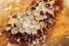 Honey Comb mit Honig Abstraktes Bienenwabenmuster für Design Stockfoto