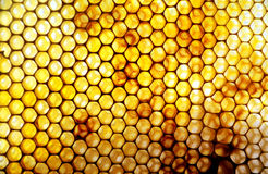 Honey Comb with pollen. In sunlight Royalty Free Stock Photos