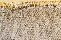 Honey Comb sellado Fotografía de archivo
