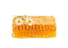 Honey in the comb with a sprig of camomile. Royalty Free Stock Photography