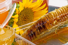 Honey in the comb Royalty Free Stock Images