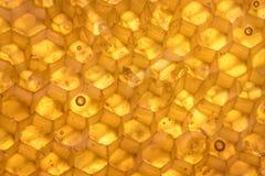 Honey Comb Texture Backlit Imagen de archivo libre de regalías