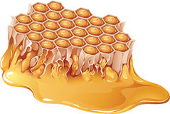 Honey comb. Vector illustration of honey comb royalty free illustration