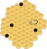 Honey Comb Vetora Illustration ilustração stock