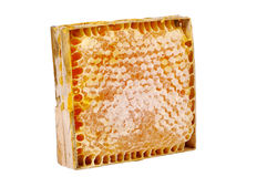 Honey comb Stock Photography