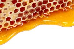 Honey and honey comb with wooden stick Royalty Free Stock Image