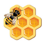 Honey Concept. Vector illustration representing bee working on honeycomb Stock Photos