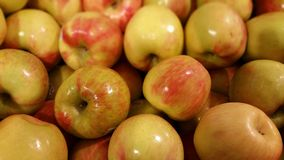 Honey Crisp Apples arkivfoton