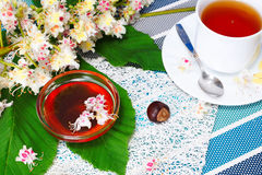 Honey, cup of tea, and fruits of chestnut. Glass bowl with chestnut honey and a cup of tea.on the background of blossoming chestnut branches Royalty Free Stock Photo