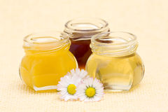 Honey and daisies royalty free stock photo