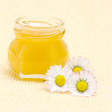 Honey and daisies Stock Photography