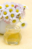 Honey and daisies Stock Images