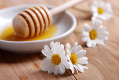 Honey and daisies Stock Image