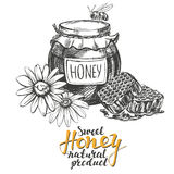 Honey. Design elements set. Detailed engraved. Vintage hand drawn vector illustration realistic sketch Royalty Free Stock Images