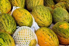 Honey-dew melon. Raw and fresh honey-dew melons, shown as raw, fresh and healthy fruit, or agriculture concept Royalty Free Stock Image