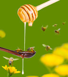 Honey diping on dipper and bee Stock Photography