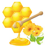 Honey dipper with bee honeycomb Stock Images