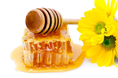 Honey dipper and honeycomb Stock Photos
