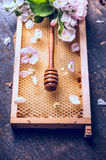 Honey dipper on honeycomb with beautiful spring blossom Royalty Free Stock Image