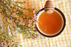 Honey dipper and manuka tree. Close up for honey dipper and manuka flower near honey bowl on a yellow tablecloth. Transparent orangish - yellowish colour and stock photography