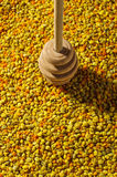 Honey dipper on pollen granules surface Stock Image